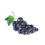 Fragrance Note: Black Currant Bud