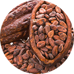 Fragrance Note: Cocoa beans