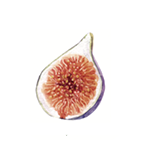 Fragrance Note: Fig