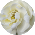 Fragrance Note: gardenia