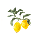 Fragrance Note: Lemon petitgrain