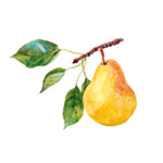 Fragrance Note: Pear