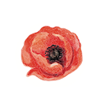 Fragrance Note: Poppy