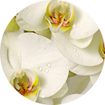 Fragrance Note: White orchid
